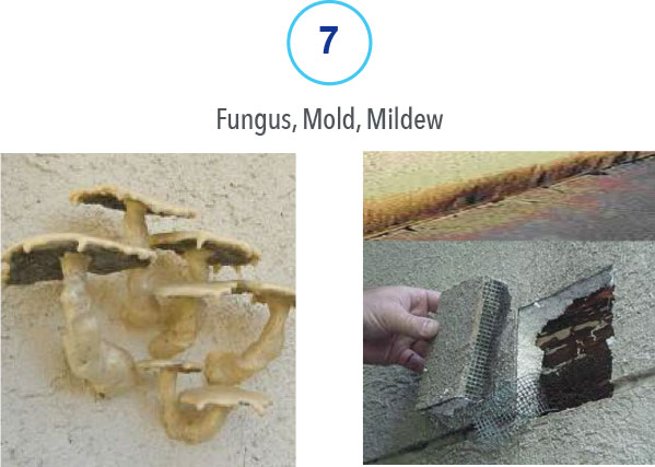 7 Fungus, Mold and Mildew